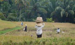 Christinas Reise _ Bali
